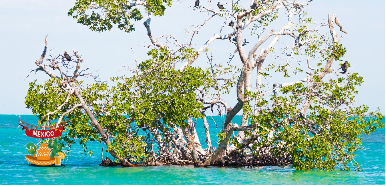 Die besten Sehenswürdigkeiten der Riviera Maya: Nationalparks